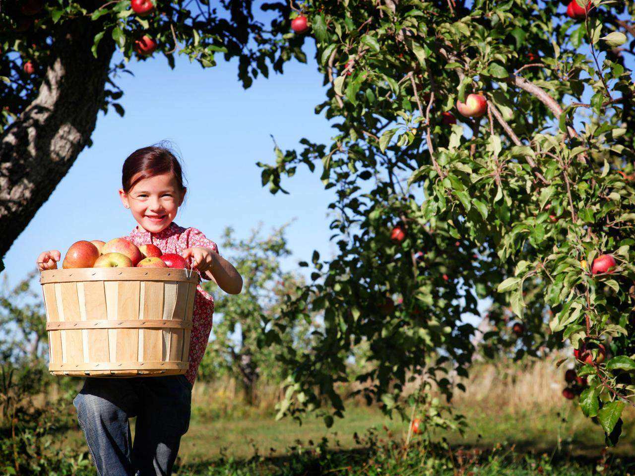 Resolve to Eat More Apples for American Heart Month