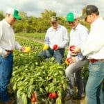 New Field Colored Pepper Varieties are Introduced at J&J Family of Farms