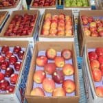 Overall USDA Apple Shipping Forecast is Looking Good, Despite Drop in Volume