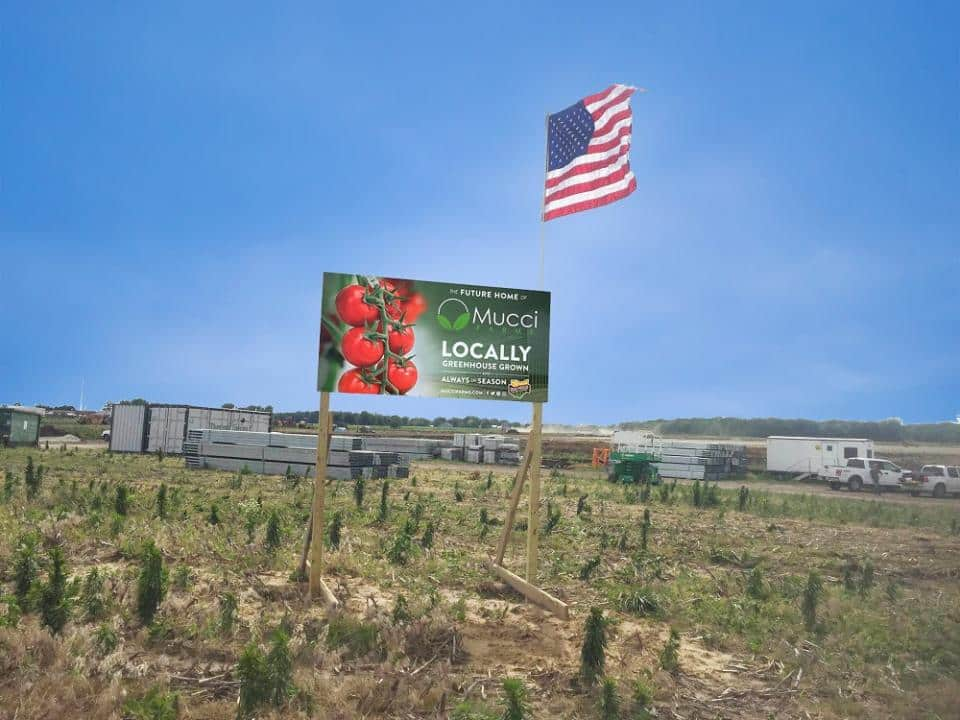 Mucci Farms is Building 3-Phase Greenhouse Project in Ohio