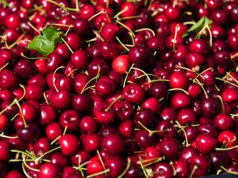 Chilean Cherry Exports Set a Record of Over 150 Million Tons