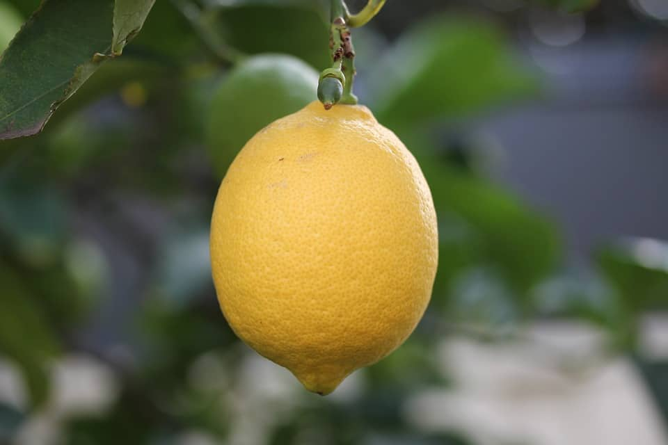 Argentina Lemons will be Available for First Time in Years