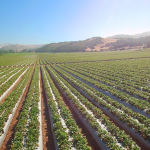 Shipping Updates: California Strawberries, New Mexico Onions, and U.S. Potatoes