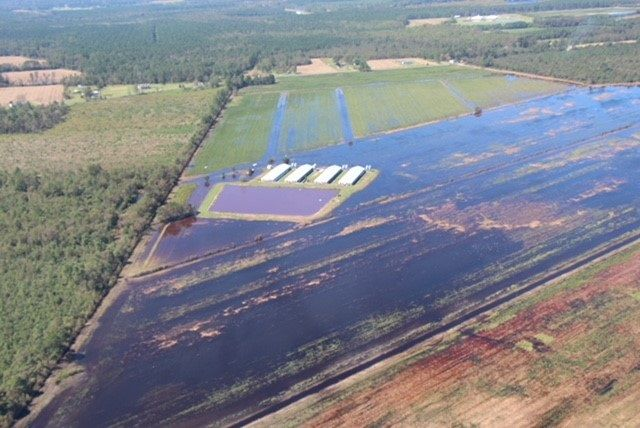 NC Sweet Potato Shipments will Suffer Significantly from Hurricane Florence